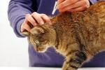 Препараты для борьбы с блохами и клещами у животных