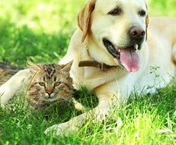 Чем опасны насекомые-паразиты у кошек и собак?