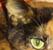 Желтуха у кошек