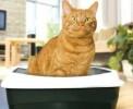 Как приучить кошку ходить в лоток?