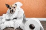 Эффективные способы коррекции расстройств пищеварения у домашних животных