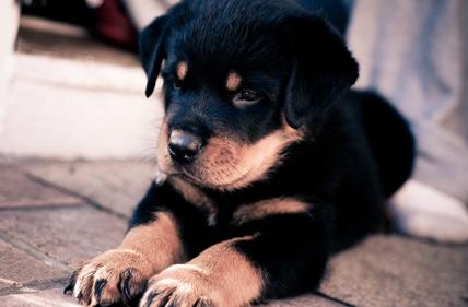 Общие рекомендации по приобретению здорового котенка или щенка