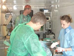 Госпиталь скорой ветеринарной помощи в Голицыно