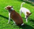 Как познакомить пожилую собаку с новым обитателем в доме