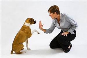 Плохая обучаемость у собак