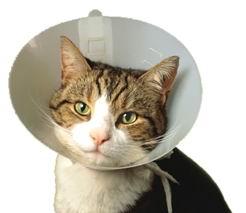 Уход за больной кошкой