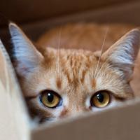 Почему кошка боится человека?