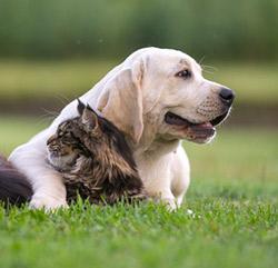 Глисты у кошек и собак: эффективная борьба