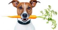 Еще раз про витамины для кошек и собак