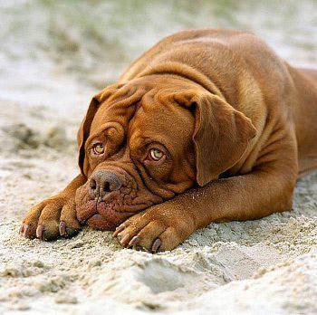 Эпилепсия у собак: проблема и решения