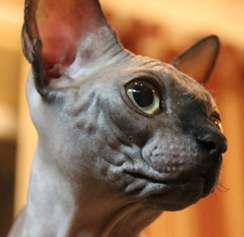 Нечистоплотное поведение кошек