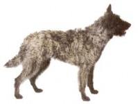 Голландская овчарка