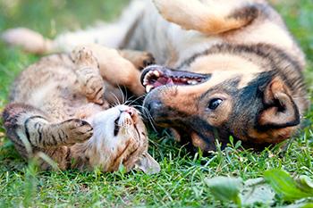Профилактика гельминтозов у домашних животных