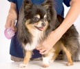 Гигиенические процедуры у собак