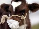 Профилактика и меры борьбы с карантинными и малоизвестными болезнями с/х животных
