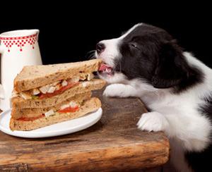 Если собака и кошка воруют со стола